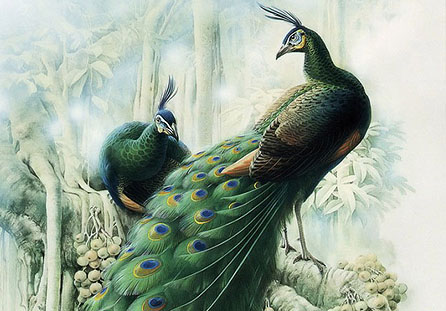 20幅美丽的花鸟绘画艺术作品