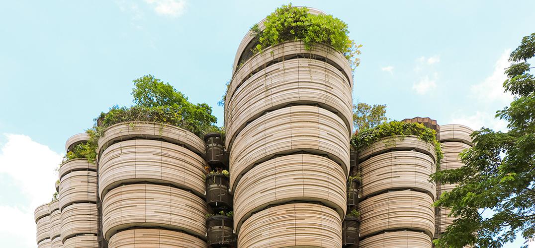 """未来我们会住在""""树楼""""里么?"""