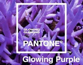 为保护海洋环境 Pantonede最新发布荧光系列三色彩