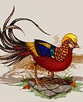 鸟类插画设计欣赏