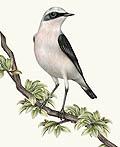 漂亮的鸟插画设计欣赏