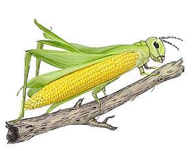 插画师Diego Cusano令人难以置信的插图欣赏