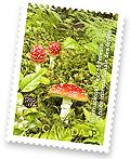 """加拿大的""""国际森林年""""邮票设计"""