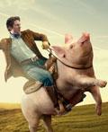 有爱创意就精彩―动物创意广告设计