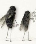 雷诺创意平面广告设计―苍蝇的故事篇