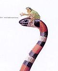 50个动物主题创意广告设计欣赏