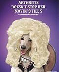 澳大利亚Metacam宠物食品及服务平面广告设计