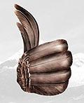 智利Recyclapolis奖平面广告设计