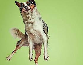 丹麦Oliver's宠物食品平面广告设计欣赏