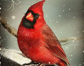 25张精美的商业圣诞卡设计