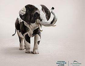 意大利Nutristar饲料平面广告设计