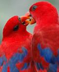 动物的爱情观