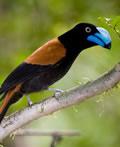 马达加斯加的珍稀奇异动物群