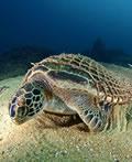 神秘的海底生物