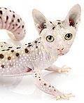 奇妙的动物-高超PS的动物照片