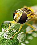 25幅漂亮的小动物摄影