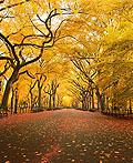 40个美丽的秋天图片