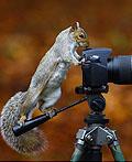 17个好萌的相机后面的动物们