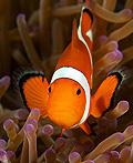 马来西亚水下生物摄影