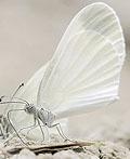 60幅迷人的蝴蝶摄影图片
