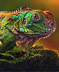 28幅美丽惊人的野生动物摄影