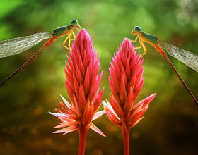 15张印尼著名摄影师阿卜杜勒・加普尔・达亚克的美丽微距照片