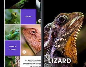 动物主题App界面UI设计欣赏