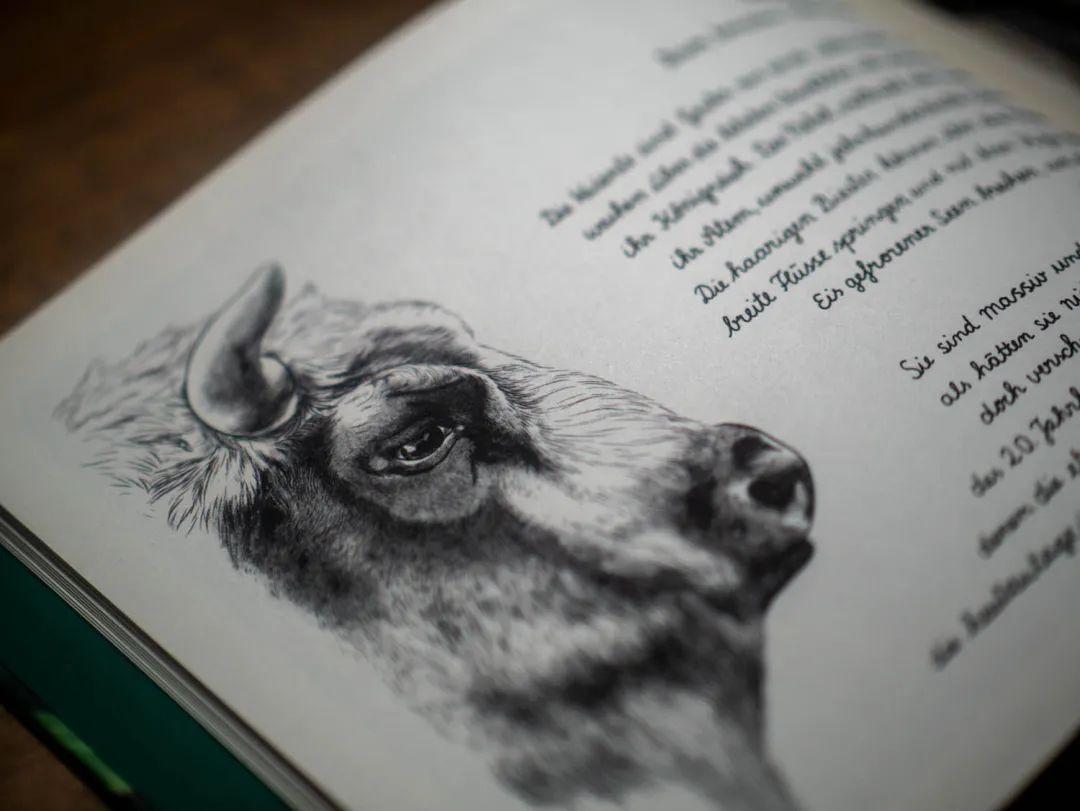 """2020""""德国最美的书"""":25本获奖书籍设计作品"""